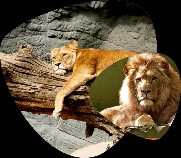 home_animals2_animals2